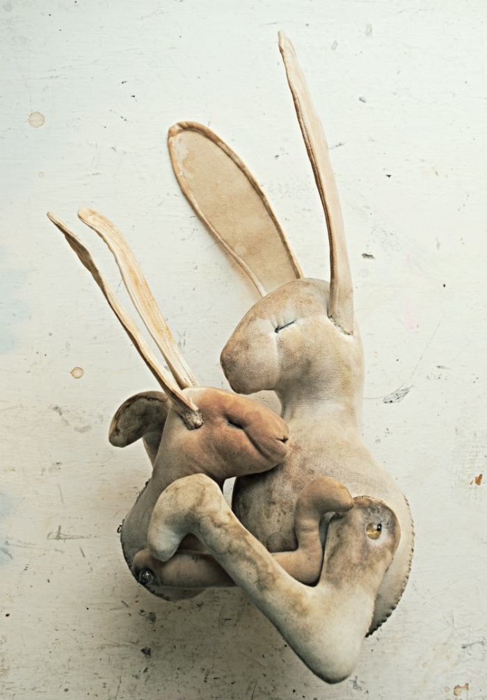 hare cuddle