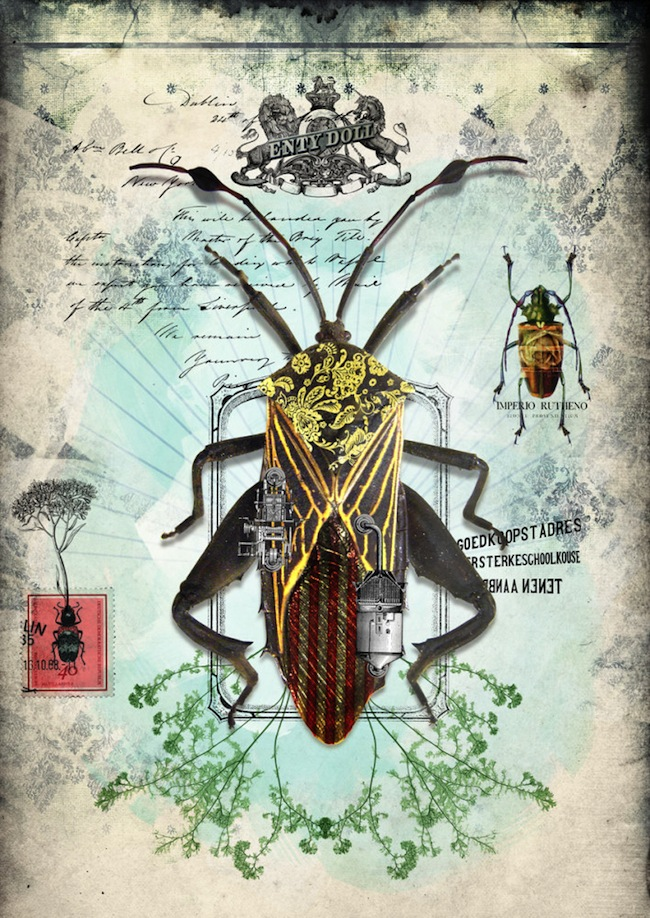 insect11_3845
