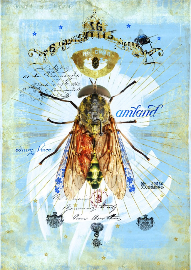 insect12_3846