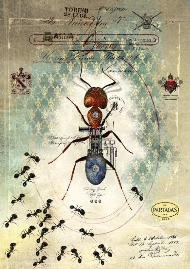 insect4-640x904